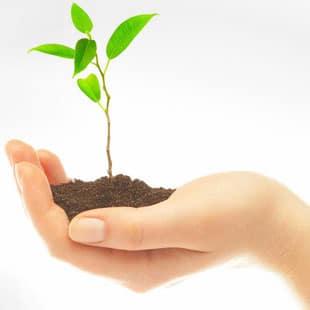 Plant Large